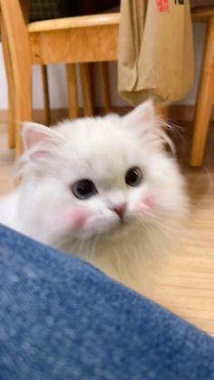 Super Cute Kittens, Funny Cute Cats, Cute Baby Cats, Cute Little Animals, Cute Cats And Kittens, Cute Funny Animals, Kittens Cutest, Funny Dogs, Beautiful Cats