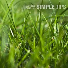 Stop Crabgrass Now Before It Takes Over Your Lawn | Garden Club