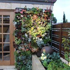 ... mediterranean - exterior - perth - Ascher Smith Landscape Designs More