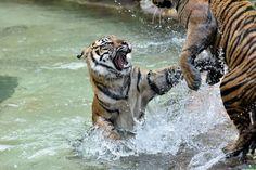 動物園へ行こう