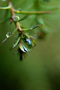 playing with water drops.