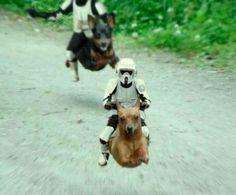 Racing hyper-dogs with Storm Trooper dog jockies