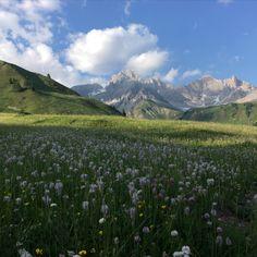 Mountains view of the Dolomites/Alps on a wild flower meadow. Wild Flower Meadow, Wild Flowers, Mountain View, Alps, Vines, Core, Digital Art, Mountains, Tik Tok