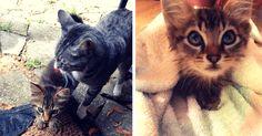 Кот принес домой нового друга и решил, что котенок теперь будет жить с ними