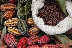 chocolate mexicano, una industria internacinal floreciente. Suiza, Belgica, etc