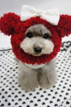 Oh my gosh...I can't help pinning this adorable little dog....and she/he must have the patience of a saint, LOL!