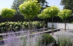 Moderne tuin met vijver