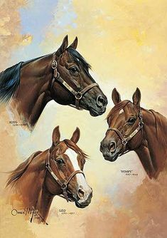 AQHA LEGENDS, one of several by Orren Mixer
