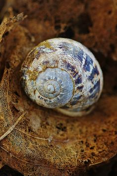 Snail by favmark1