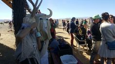 AfrikaBurn in iKapa, Western Cape Four Square, Goats, Westerns, Cape, Fish, Animals, Mantle, Cabo, Animales