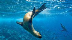 I want to meet seals!