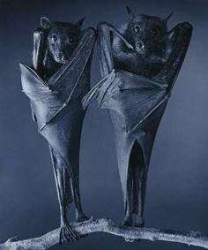bats by tim flach