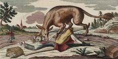 cruza hiena perro - Buscar con Google