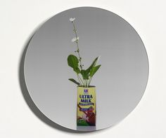 Melati Air (Jasminum sambac)   Edwin ROSENO   NGV
