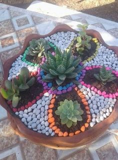 Floral Arrangements of Succulent Plants - Small Colorful Flowers .- Blumenarrangements von saftigen Pflanzen – kleiner bunter Blumengarten – Kemal Doruk Floral Arrangements of Succulent Plants – Small Colorful Flower Garden – Kemal Doruk - Succulent Landscaping, Succulent Gardening, Small Backyard Landscaping, Cacti And Succulents, Planting Succulents, Container Gardening, Landscaping Ideas, Backyard Ideas, Fairy Gardening
