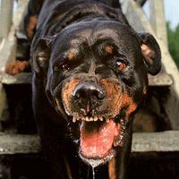 Mean Dogs Bite - How to avoid dangerous run-in with Cujo   Runner's World