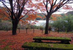雄大な秋の自然を感じよう!「鹿児島県」の人気紅葉スポットTOP10 | RETRIP[リトリップ]