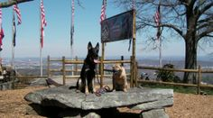 """Rock City, just outside Chattanooga, TN, was known for it's creative marketing - painting barn roofs with the """"See Rock City"""" slogan. What many people don't know is that this attraction is also pet friendly! We had a great time there with the dogs. Find more pet friendly places to stay and things to do near Rock City here: http://www.gopetfriendly.com/browse/united-states/tennessee/chattanooga"""