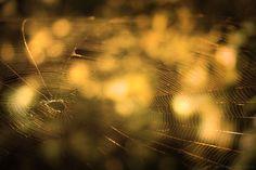 A large spiderweb glistens in the sunlight.