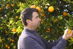 Guide To Pruning Citrus Trees For Optimal Production