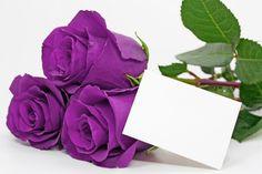 Purple roses 31130 - Flowers photo - Flowers