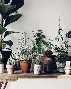Beautiful inspiration for plant loving folk (my scandinavian home) - House Plants - ideas of House Plants - I N S T A G R A M Mini Plantas, Plantas Indoor, Art Furniture, Potted Plants, Indoor Plants, Green Plants, Indoor Gardening, Gardening Hacks, Large Plants