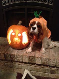 Cavalier pumpkin
