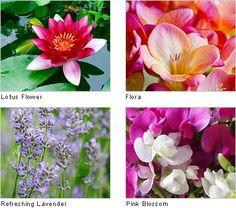Microfresh, Florales