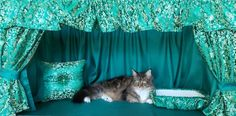 Cage, Curtains, Pets, Home Decor, Insulated Curtains, Animals And Pets, Interior Design, Home Interiors, Decoration Home