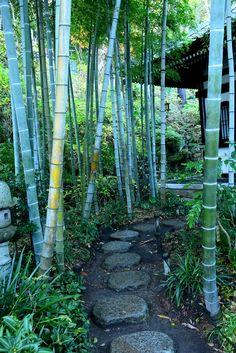鎌倉・長谷寺の竹林 Bamboo Grove  of Hasedera Temple in Kamakura,Japan