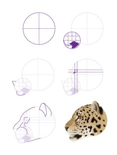 In our first tutorial, we looked at drawing lions, tigers, cheetahs and snow leopards. Today we're going to take care of the other wild cats, like leopards, jaguars, mountain lions and lynx. Once...