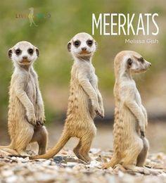 Meerkats, Melissa Gish, 9781608185696, 11/19/15