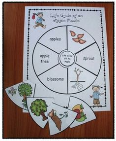 Apple activities: Life cycle of an apple puzzle. Like that it's in a circle like a cycle. Comes in BW for kiddos to make their own as well as color which is perfect for a center. Apple Activities Kindergarten, Seasons Activities, Sequencing Activities, Preschool Apples, Science Activities, Tree Life Cycle, Apple Life Cycle, Life Cycle Craft, Apple Plant