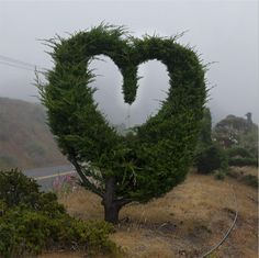 ~Heart Tree~