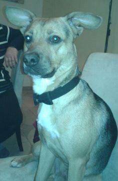 Rocky very elegant dog!
