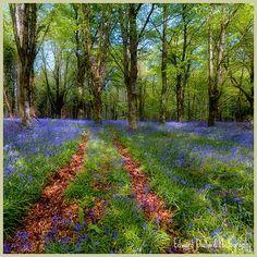 "A PATH THROUGH THE FOREST  ""http://edwarddullard.phanfare.com/""."