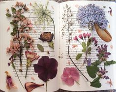 theartistandthephotographer: My collection of pressed flowers from this summer