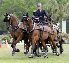 Four-In-Hand - Chester Weber with his team during the USEF National Four-in-Hand Championship