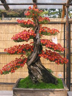 Bonsai Trees http://vur.me/tbw/Bonsai-Tree-Secrets GREAT EXAMPLES OF DIFFERENT STYLES OF BONSAI - GOOD REFERENCE