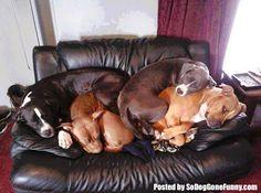 So DogGone Funny!: 150227pg - Adorable Dog Pile-Ups, Stacks, & Crowds...#dogs #Pitbulls #Pets
