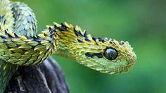 Snake....
