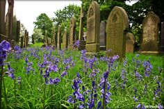 spring time in the cemetery. St Catherines, Barton Upon Irwell, Barton ,Lancashire. My Heritage, Worlds Largest, Outdoor Structures, Deviantart, Places, Artist, Nature, Beautiful, Vanity