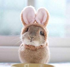 Extra čepička pro králíčka