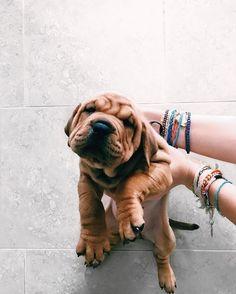 Precious little wrinkles