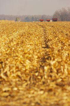 USDA: 2013 corn harvest a record 13.9B bushels