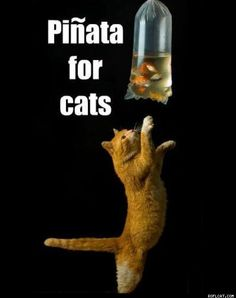 Piñata for cats -- a bag of goldfish! #catpiñata