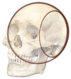 Art Kink Human Face Drawing, Human Anatomy Drawing, Drawing Heads, Face Anatomy, Book Drawing, Anatomy Art, Drawing Practice, Figure Drawing, Realistic Pencil Drawings