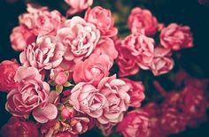 More roses #roses #garden