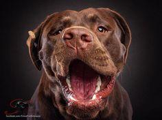 Забавные фотографии собак, ловящих лакомства (8)