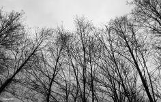 alberi spogli